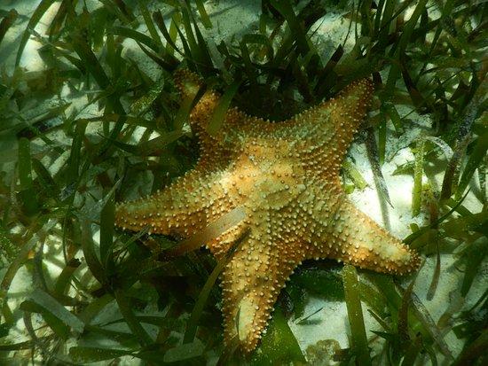Chichi Charters: Star Fish