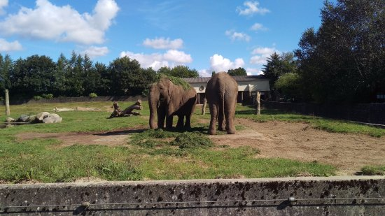 Givskud Zoo: Elefanter