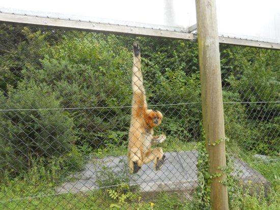 Monkey World Φωτογραφία