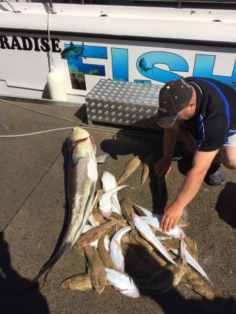 Paradise Fishing Charters: A great day