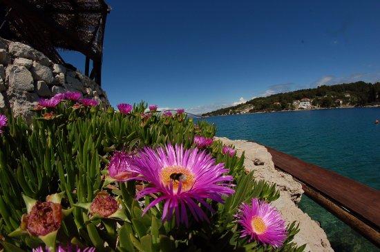 Solta Island, Croatia: Taras porośnięty pięknymi kwiatami