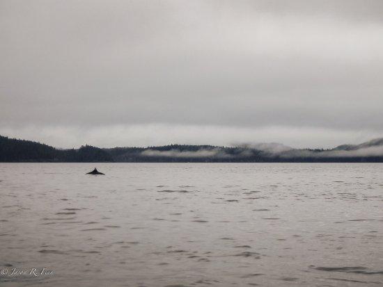 Nanaimo, Canadá: Dall's Porpoise