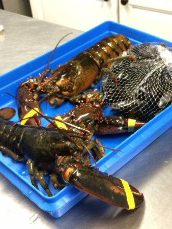 C-Ray Lobster: Ready to cook!