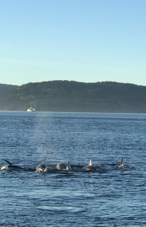 Blackfish Tours by Outer Island Expeditions: All lined up