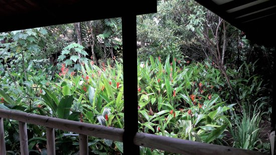 Pachira Lodge: Vista desde la habitación