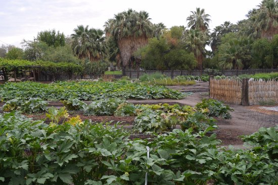 29 Palms Inn: Summer views at our Faultline Farm, when some crops go to flower, and others start to thrive