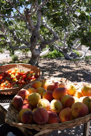 29 Palms Inn: Summer tomatoes & peaches, grown with love at our Faultline Farm