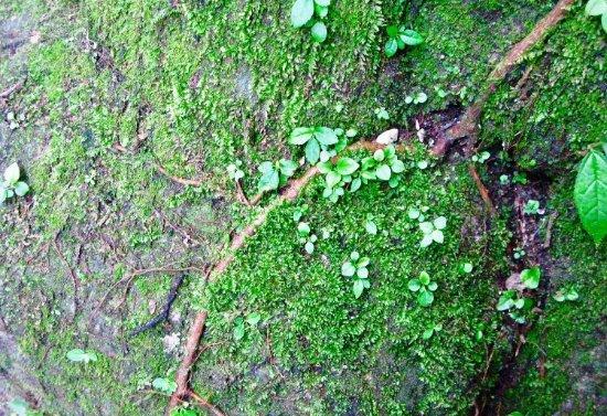 National Park of Palenque: Bitki türleri