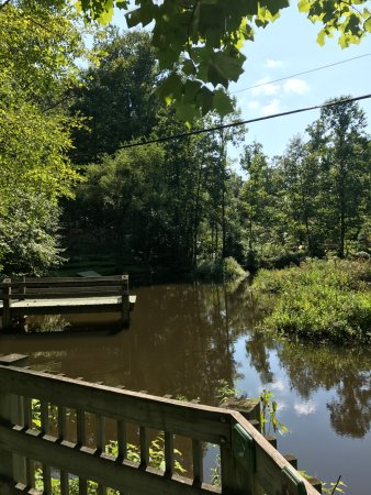 Brookside Nature Center: The pond is the showcase of water plants and animals