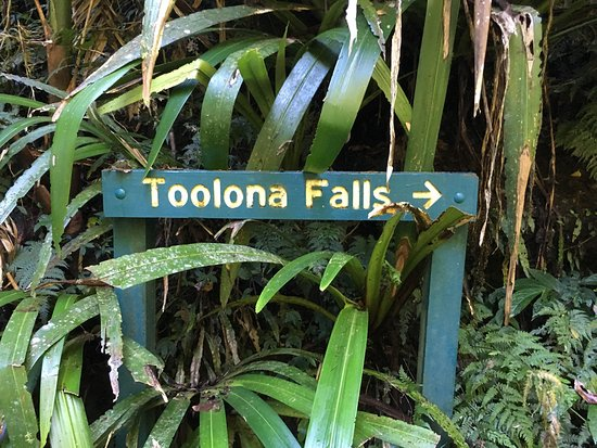 Canungra, Australia: Toloona and the many water falls accessed through Lamington National Park - stay at O'Reillys Ra