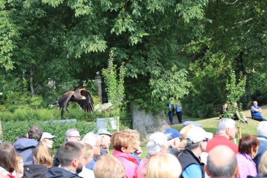 Invergordon Shore Excursions and Tours: Falconry show