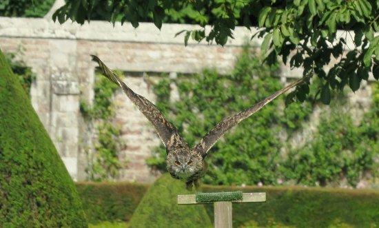 Invergordon Shore Excursions and Tours: amazing birds
