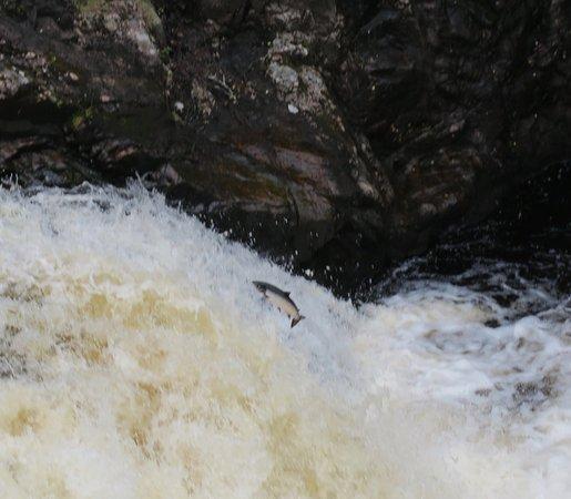 Invergordon Shore Excursions and Tours: Salmon at Shin Falls