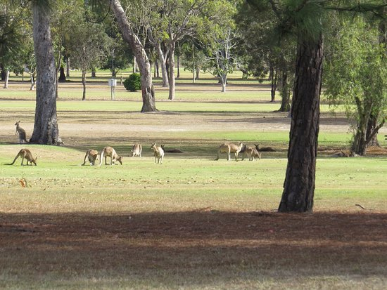 Mareeba, Australia: Plenty of kangaroos around