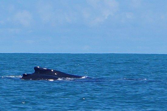 Dolphin Tours Photo