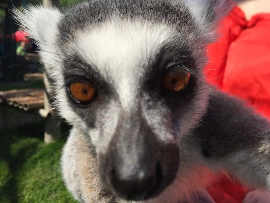 Olands Djur & Nojespark: Inne hos Lemurerna.