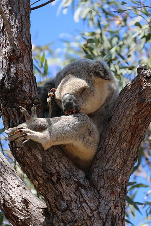 Magnetic Island, Australia: photo0.jpg