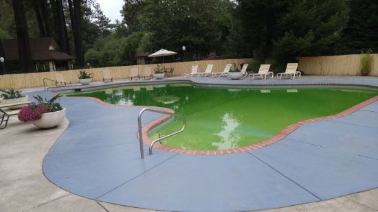 West Sonoma Inn & Spa: Nice pool but the algae bloom needs to be cleaned up.