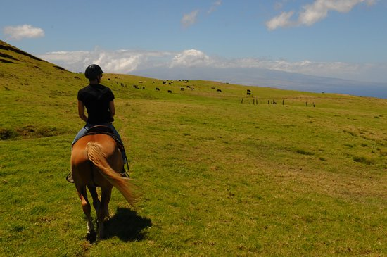 Paniolo Adventures: Approaching the herd