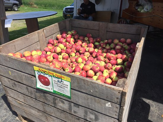Red Creek, État de New York : Wager's Country Apple Barn - fruit, veggies, baked goods and antiques!