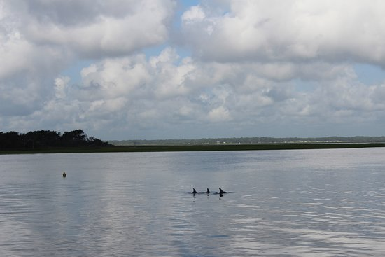 Amelia River Cruises & Charters: The dolphins!