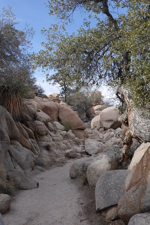 29 Palms Inn: Adventure awaits in Joshua Tree National Park
