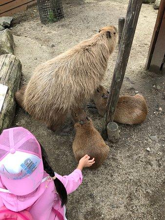 Nasu Animal Kingdom (Nasu-machi, Japan): Top Tips Before You Go (with Photos)...