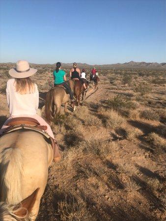 Yucca 사진