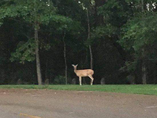 Sam Houston Jones State Park: photo1.jpg