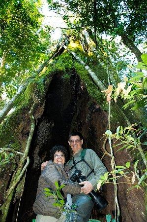Andresito, Argentina: En los senderos del bosque esta centenaria cañafistula, hace la delicia de los ojos y de