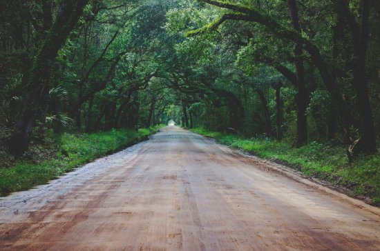 Edisto Island, SC: Beautiful canopy of Oaks over the road in