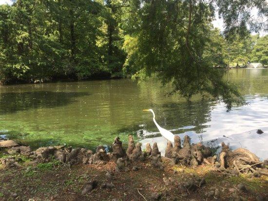 Swan Lake Iris Gardens: photo0.jpg