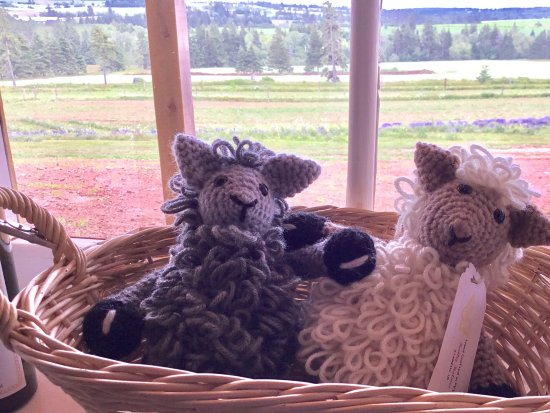 Hunter River, Canadá: Crafts and lavender in the field