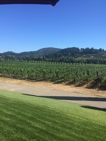 Healdsburg, CA: Gorgeous vineyard