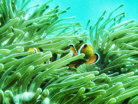 Aqua Vision Scuba Diving: IMG_0693-01-1000x751_large.jpg