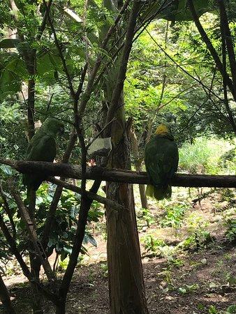 Rincon de La Vieja, Costa Rica: photo4.jpg