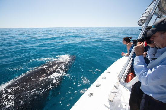 Urangan, Australia: Go with the experts at Pacific Whale Foundation on the only whalewatch based on over 30 years of