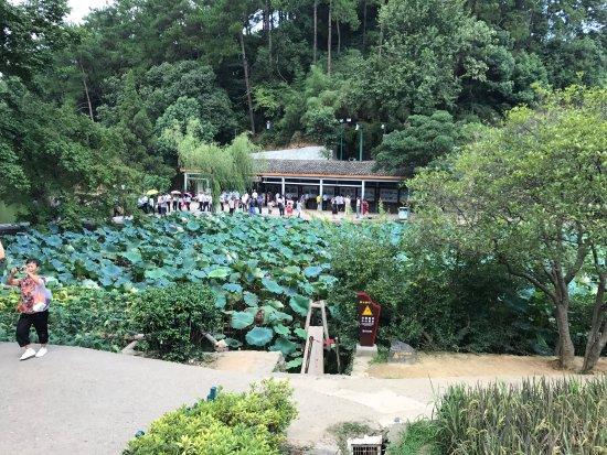 Shaoshan, Kina: photo9.jpg