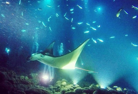 Trip Advisor Big Island Divers