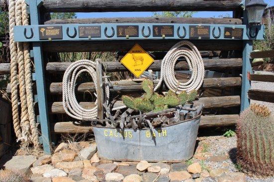 Chloride, AZ: Petit jardin de cactus