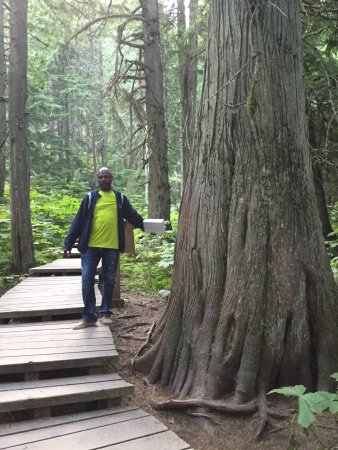 Giant Cedars Boardwalk Trail: It is very amazing to see these trees which might be hundreds of years old. Great to walk the bo