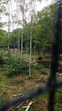Herne Bay, UK: Bear from the rope bridge