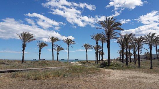 Sehr Schöner Großer Strand Playa Del Pinar Castellón De La Plana Reisebewertungen Tripadvisor