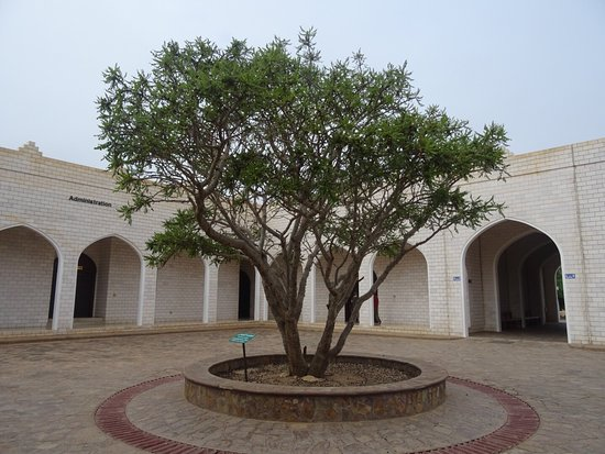 an overview of the land of frankincense museum in salalah oman Oman & the frankincense coast overview & map visit salalah's museum of frankincense land and the unesco world heritage al.