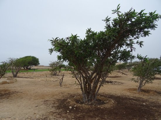 Museum of the Frankincense Land : photo2.jpg