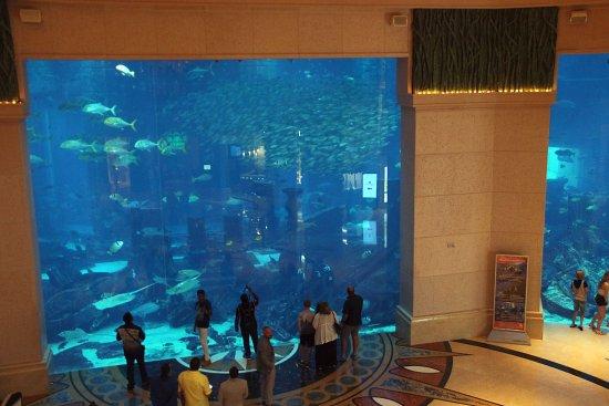 Atlantis, The Palm: The aquarium!