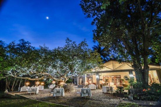 White River, แอฟริกาใต้: Dinning under the Fairy Lit Rock Fig Tree