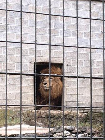 Zoo Al Maglio: photo0.jpg