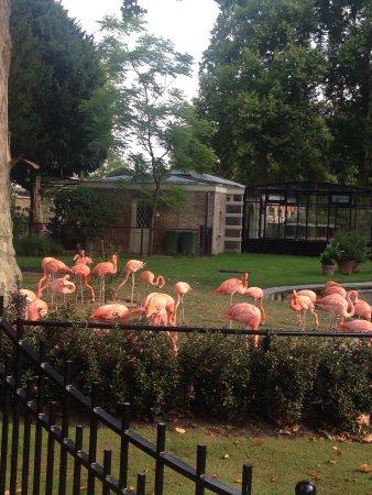 Antwerp Zoo (Dierentuin): photo0.jpg