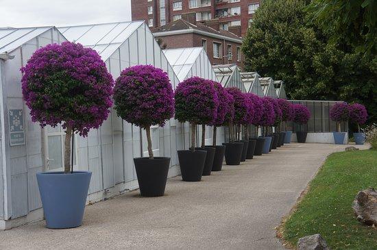 Jardin des plantes amiens frankrijk beoordelingen - Jardin des plantes amiens ...